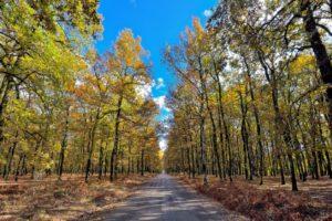 Foloi Forest